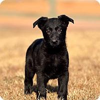 Adopt A Pet :: Puppies - Dacula, GA