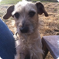 Adopt A Pet :: Gabriel - Norwalk, CT