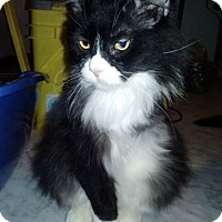 Adopt A Pet :: Cassidy - Delmont, PA