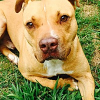 Adopt A Pet :: Casey - Demopolis, AL