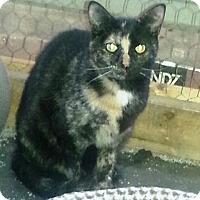 Adopt A Pet :: Clementine - Ravenna, TX