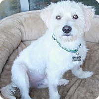 Adopt A Pet :: Rockport - meet him!!! - Norwalk, CT
