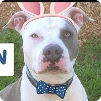 Adopt A Pet :: RYAN-Low Fees/Neutered - Red Bluff, CA