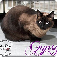 Siamese Cat for adoption in Canyon Country, California - Gypsy