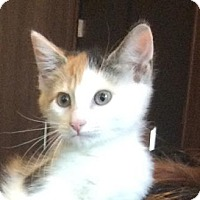 Adopt A Pet :: Charlotte - Bellevue, WA