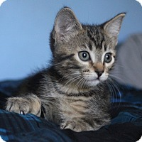Adopt A Pet :: FeFe - Orange, CA