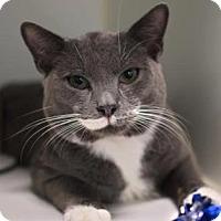 Adopt A Pet :: Cat Williams - New York, NY