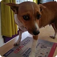 Adopt A Pet :: Torry - San Diego, CA