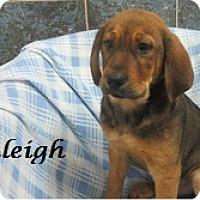 Adopt A Pet :: Raleigh - Bartonsville, PA