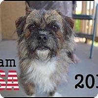 Adopt A Pet :: Jacob Dalton - Brooklyn, NY