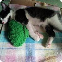 Adopt A Pet :: Leonard - Walled Lake, MI