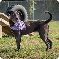 Adopt A Pet :: Gwyneth - Madionsville, KY