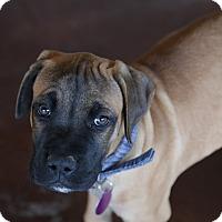 Adopt A Pet :: Jacko - San Antonio, TX