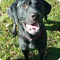 Adopt A Pet :: Bubba - Lisbon, OH
