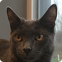 Adopt A Pet :: Dorito - Lafayette, NJ