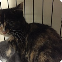 Adopt A Pet :: Francine - Forest Hills, NY