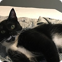 Adopt A Pet :: Selena Gomez - Houston, TX