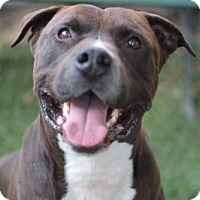 Adopt A Pet :: Willie - tucson, AZ