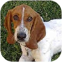 Adopt A Pet :: Sophia - Phoenix, AZ