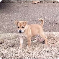 Adopt A Pet :: Noelle - Glastonbury, CT