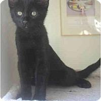 Adopt A Pet :: Pepito - Davis, CA
