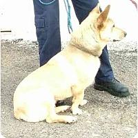 Adopt A Pet :: Buster - Inola, OK
