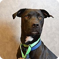 Adopt A Pet :: Lennox - Southampton, PA