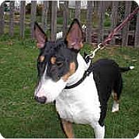 Adopt A Pet :: Dixie - Reisterstown, MD