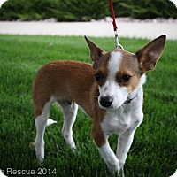 Adopt A Pet :: SVEN - Broomfield, CO
