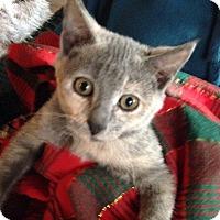 Adopt A Pet :: Penny Lane - St. Louis, MO