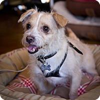 Adopt A Pet :: Alvin - Orange, CA