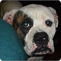 Adopt A Pet :: Vinnie - Cleveland, OH