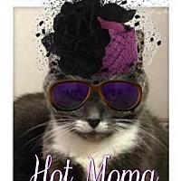 Adopt A Pet :: Suzy - deaf senior 25.00 - Rochester, NY