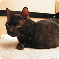 Adopt A Pet :: Taz - Riverside, CA