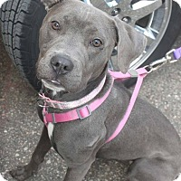 Adopt A Pet :: Candy - Detroit, MI
