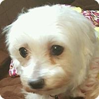 Adopt A Pet :: Jill - MINNEAPOLIS, KS
