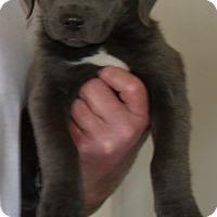 Adopt A Pet :: MARILYN - Corona, CA