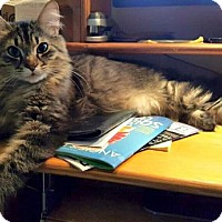 Adopt A Pet :: Rocky - Buford, GA