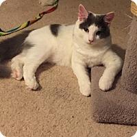 Adopt A Pet :: Noah - Sarasota, FL