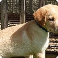 Adopt A Pet :: Odin - Bedminster, NJ