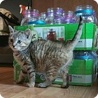 Adopt A Pet :: Barbara - Palmyra, NJ