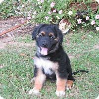 Adopt A Pet :: ASA - Bedminster, NJ
