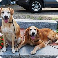 Adopt A Pet :: Rachel and Sara - New Canaan, CT