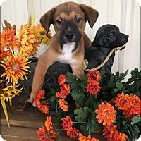 Adopt A Pet :: Rusty - Jacksonville, TX