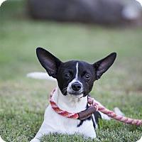 Adopt A Pet :: Dominik - San Diego, CA