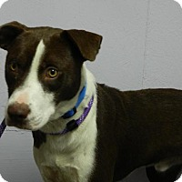 Adopt A Pet :: Deuce - Waverly, OH