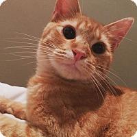 Adopt A Pet :: Oliver - Hopkinsville, KY