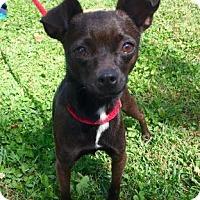 Adopt A Pet :: Merigold - Hendersonville, NC