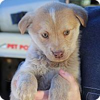 Adopt A Pet :: Dean - Sawyer, ND