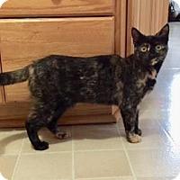 Adopt A Pet :: Amelia - Hamilton, ON